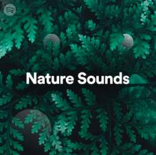 musique pour s'endormir nature